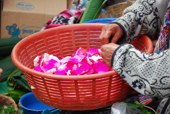 Flowers Guatemala