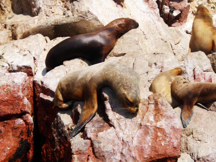 Snapshot From: Islas Ballestas Peru