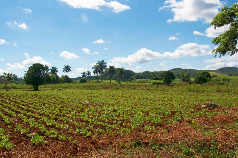 vinales tobacco farm tours