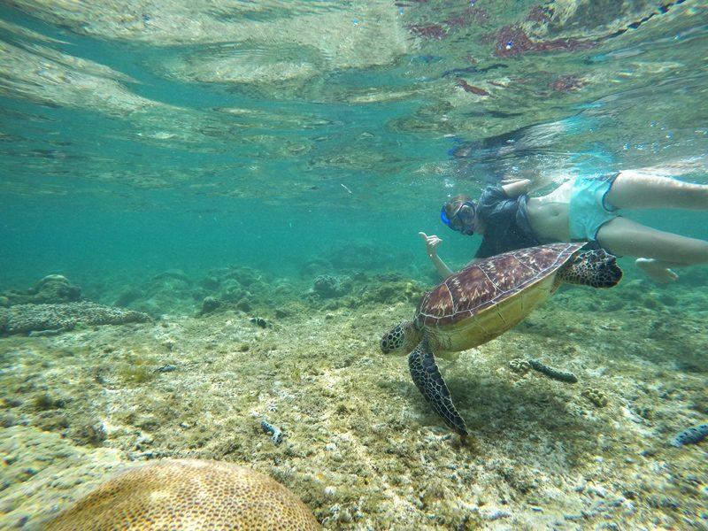 swim with sea turtles apo island