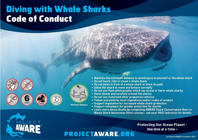 whale shark code of conduct oslob
