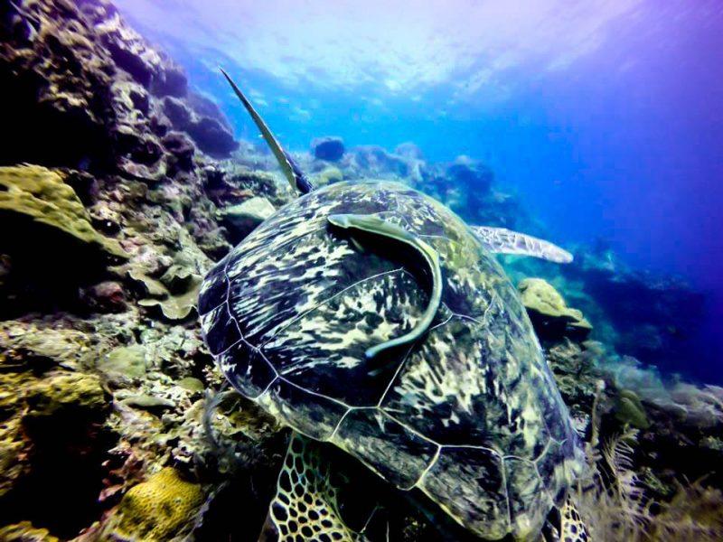 diving in moalboal cebu philippines