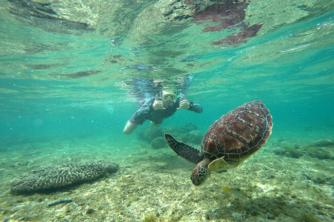 swim with turtles apo island philippines