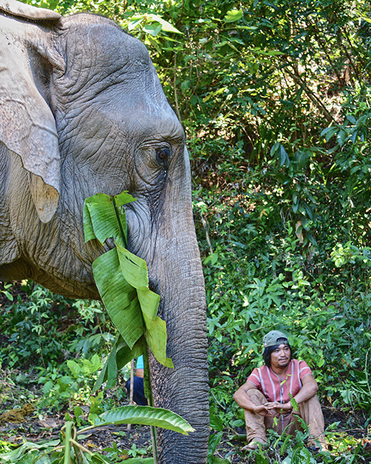 responsible animal tour operators